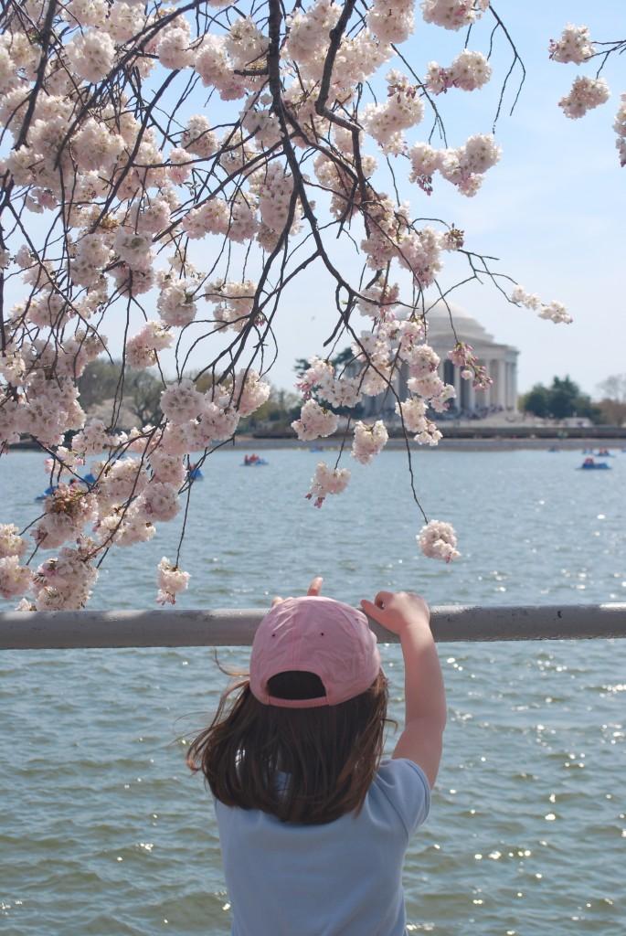 Washington DC Tidal Basin Jefferson Memorial