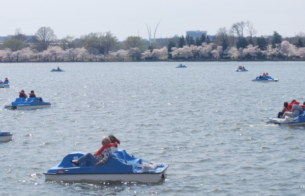 Tidal Basin Paddle Boats